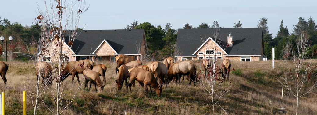 The Reserve at Gearhart Wildlife